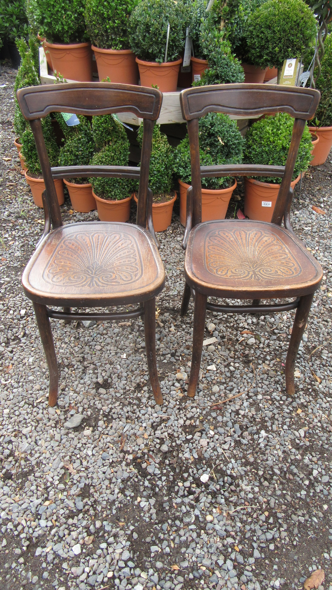 GOOD PAIR PAIR OF ANTIQUE THONET BENTWOOD CHAIRS